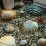 Монтаж полимерных наливных полов